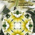 lily-magnificence-quote-adj_n