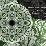 variegated-leaf-star-quote-adj_n