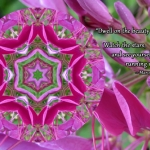 vibrant-petals-and-lines-quote-adj_n